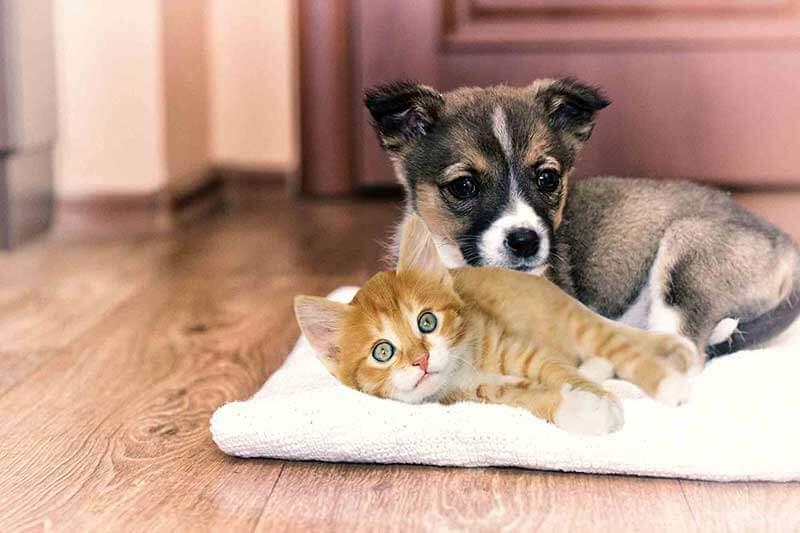 Bridgeport WV Puppy & Kitten Care